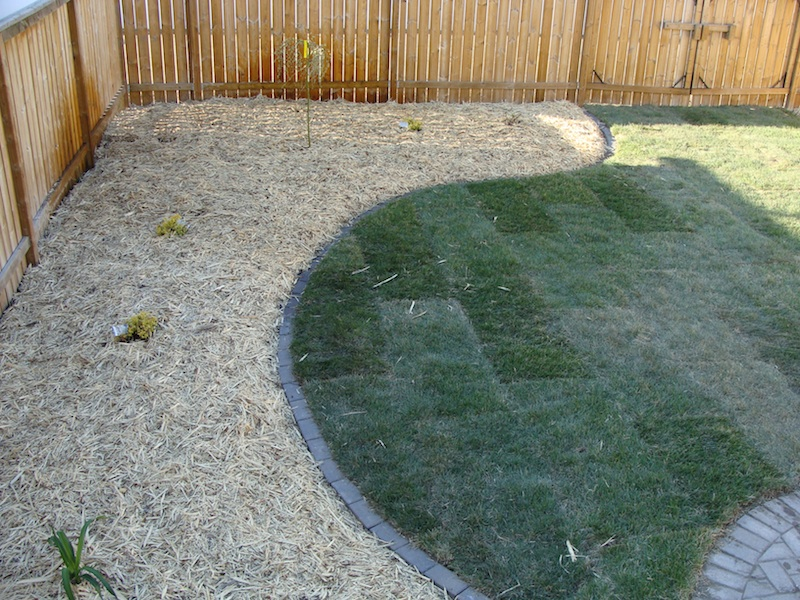 yard 1 side view
